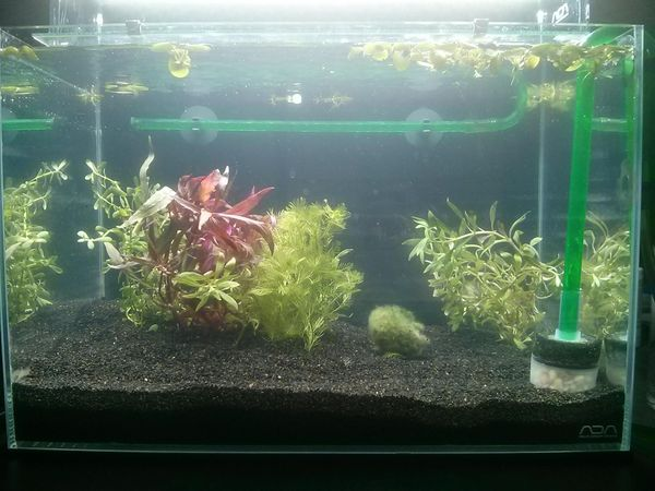 First Attempt at Aquarium Plants